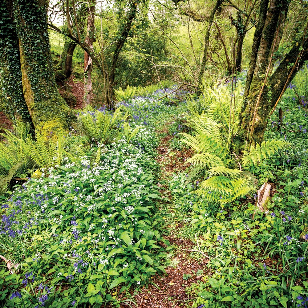 Woodland Walks through Longlands in Devon