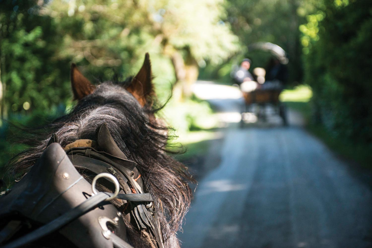Horse and Carriage Adventures in Devon