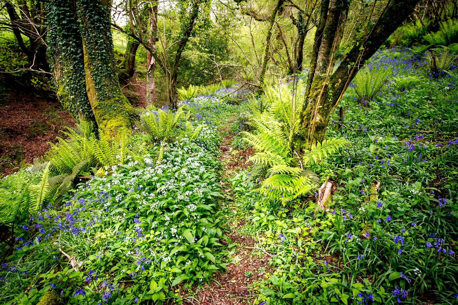 Woodland walks around Longlands in Devon