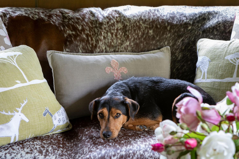 Longlands Devon Dog Friendly Lodge Accommodation